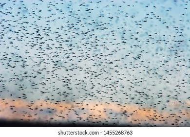Swarm of mosquitoes. A lot of mosquitoes on the background of the sunset sky. Wildlife and insects of the arctic tundra. Summer in the far north. Chukotka, Siberia, Far East of Russia.