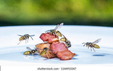 a swarm of wasps flies on a plate and eats fried meat