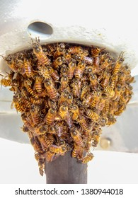 Swarming bees have clustered on the underside of a compass repeater, on a small ship in Rabaul, Papua New Guina