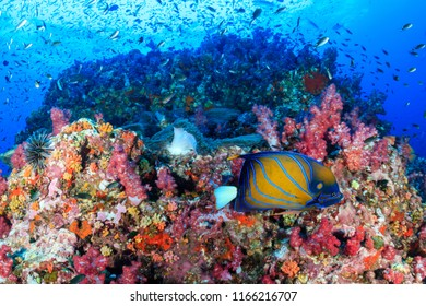 Swarms of colorful tropical fish swimming around a healthy, vibrant tropical coral reef