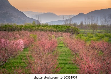 Swat Valley is among the most attractive & beautiful valley in the Pakistan and  is full of  fruits & vegetables.