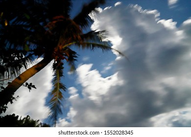"""Swaying coconut tree and clean night sky with clouds moving. A windy day in small island called""""Green Island"""", which is a famous tour attraction in Taiwan."""