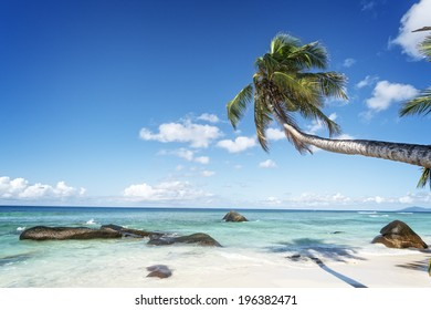 swaying palm tree on the white sand tropical beach of Silhouette island, Seychelles, Africa