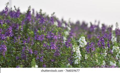 Swaying purple flowers