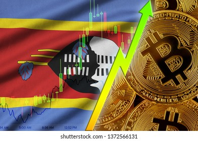 Swaziland flag and cryptocurrency growing trend with many golden bitcoins