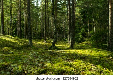 Sweden's forest