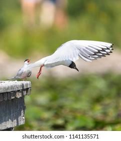 Swedish bird nature