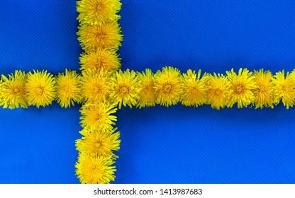 Swedish Flag. Midsummer. Yellow dandelions. Swedish Flag Day concept. Beautiful Swedish Flag with yellow dandelion stripes. Sveriges nationaldag. National Day of Sweden. Swedish Flag Day.