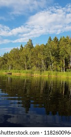Swedish forest by lake