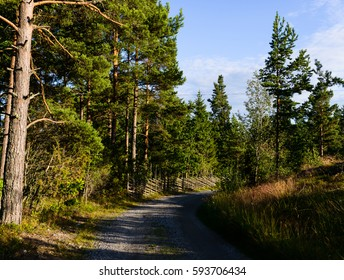Swedish gravel forest road in the sunshine a summer day