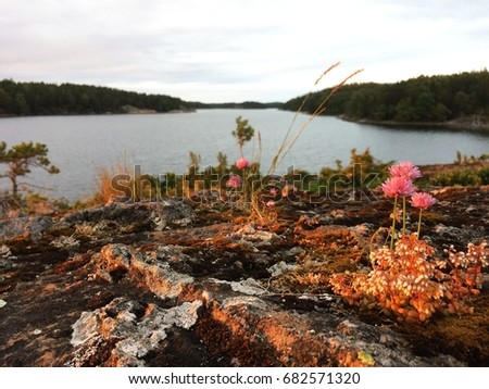 f057349f5fa4 Swedish Harsh Beautiful Environment Flowers The Stock Photo (Edit ...