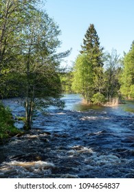 Swedish river and natural salmon area in spring. Farnebofjarden national park.