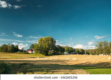 Swedish Rural Landscape Field Meadow With Dry Hay Bales During Harvest In Sunny Evening.  Farmland With Red Farm Barn In Village.