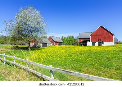 Swedish spring farm with traditional fence