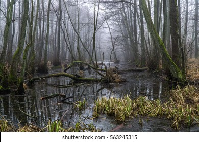 Swedish winter in the forest swamps