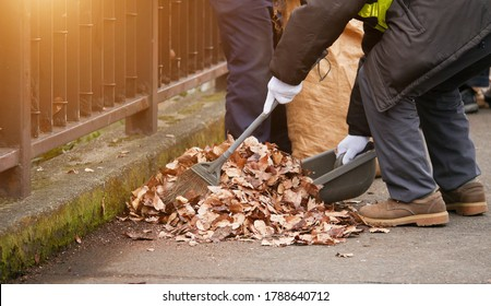 Sweeping dry leaves with broom.Autumn, fall season.Clean the garden.
