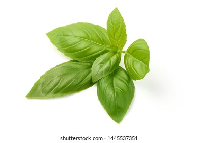 Sweet basil herb leaves, close-up, isolated on white background. Sweet Genovese basil.