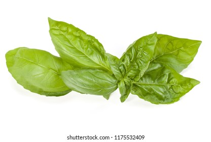 sweet basil herb leaves isolated on white background. Genovese basil leaf.