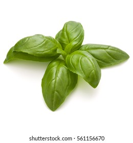 Sweet basil herb leaves isolated on white background closeup.