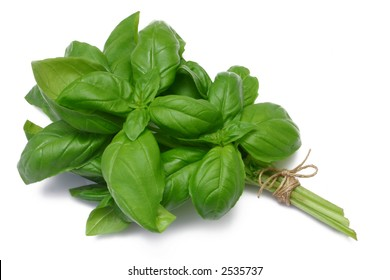 Sweet Basil (herb) tied in a bunch with twine, isolated on white