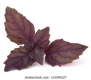 Sweet basil leaves isolated on white background