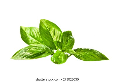 Sweet basil leaves on white background
