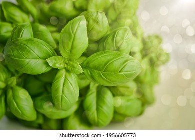 Sweet basil: a species of Mint, also known as Great basil, Saint-Joseph's-wort, Genovese basil, it's botanical name is Ocimum basilicum.
