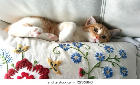 A sweet and beautiful little red and white kitten cat lying stuck between a pillow and a white sofa backrest