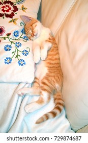 A sweet and beautiful little red and white kitten cat lying between a pillow and a backrest of a white sofa sleeping