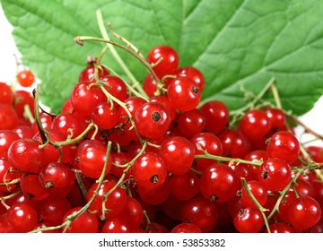 Sweet berries red currant for dessert and vegetarian diet
