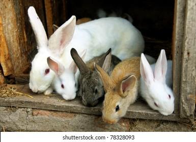 sweet bunny rabbits family