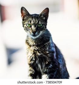 Sweet cat with amazing eyes