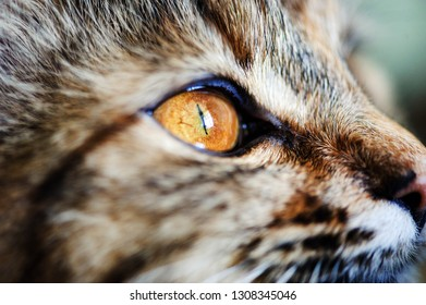 Sweet cat, very playful, with yellow eyes