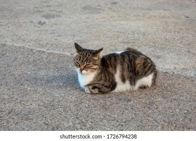 sweet cats and natural life