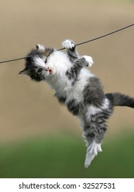 sweet charming kitten hangs in the air on a wire