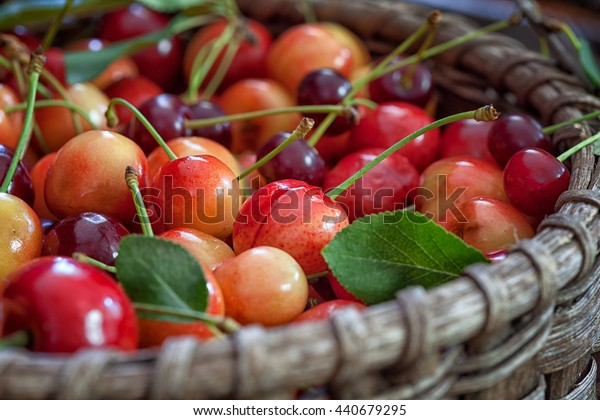 Sweet Cherries in wicker basket