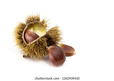 Sweet chestnut Castanea sativa half open sheath with one seeds inside, two seeds beside. Isolated on white background.