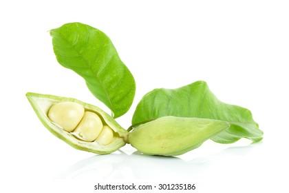 sweet chestnuts (Sterculia monosperma) on white background.
