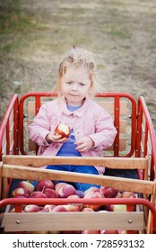 Sweet child sitting in red wagon full of hand picked apples