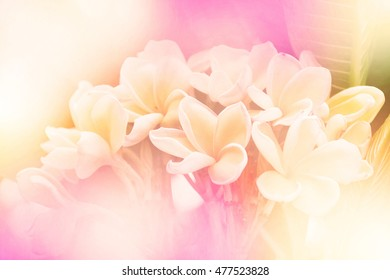 Sweet color beautiful flowers in soft style for background