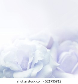 sweet color flower petals in soft color style on mulberry paper texture for winter season concept background