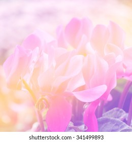 sweet color flowers in soft color and blur style for background
