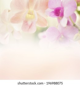 Sweet color orchid in soft color and blur style for background