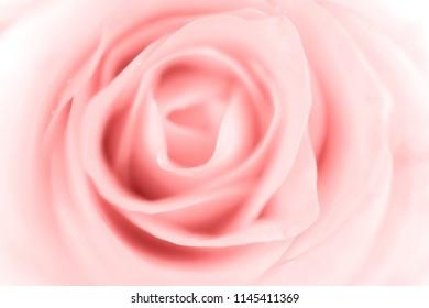 Sweet color of rose, soft light for valentine background