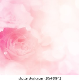 sweet color roses in soft style for background