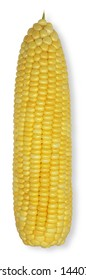 Sweet corn has a lot of sugar, Sweet taste. Eaten by grilling or boiling. Rich in vitamin A B, minerals & fiber. A lot of Ferulic Acid, Zeaxanthin, Lutein, Cryptoxanthin & Beta Carotene.