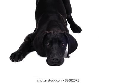 Sweet cute dog
