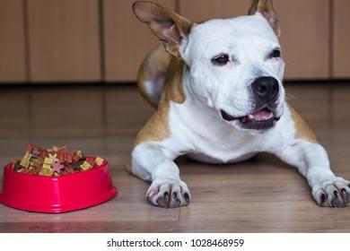 A sweet dog eats a treat
