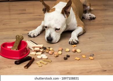 A sweet dog eats a treats