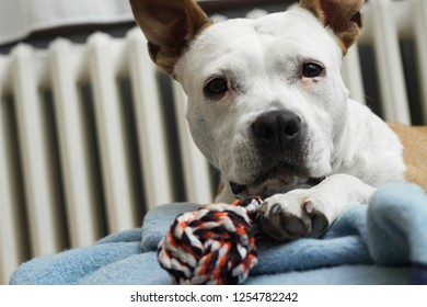 A sweet dog with his favorite toy